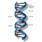 VISIONPOINTMSJ NUTRITION CONSULTING: PROTECTING YOUR DNA: Mikey St. John