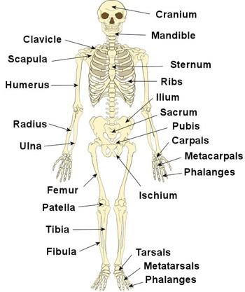 skeleton350112615747.jpg